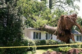 Tree Falls on Neighbors Property