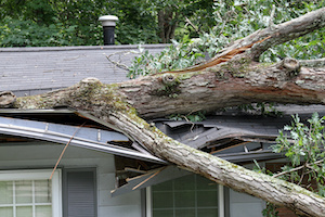 Fallen Trees and Your Insurance Protection